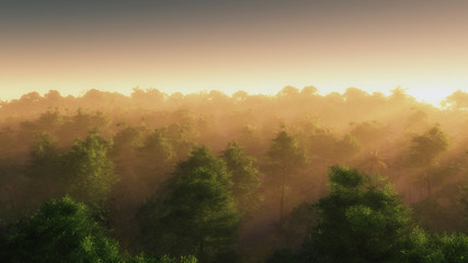 High angle view of summer forest in mist.
