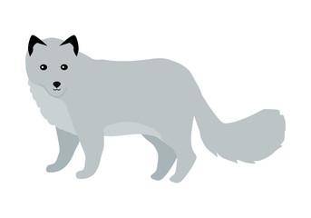Polar Fox Vector Illustration in Flat Design