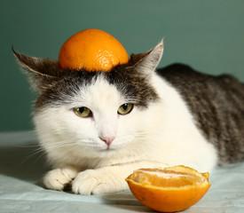 cat in funny orange cap close up