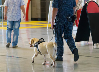 Police and sniffer dogs at the airport.