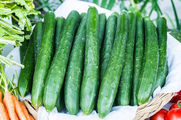 fresh green japanese cucumber in basket