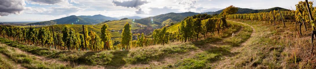 Niedermorschwihr, chemin de vigne avec un chien, à l'automne