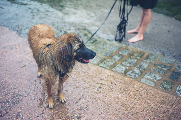 Wet dog on slipway with owner