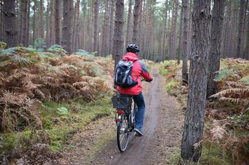 Radfahrer im Darßer Urwald