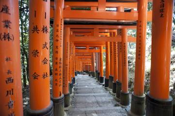 torii shrine tunnel