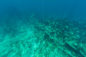Underwater from Bermuda Island