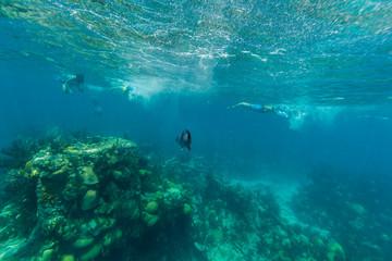 Underwater from Bermuda Island