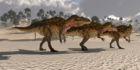 Acrocanthosaurus Dinosaurs - Acrocanthosaurus theropod dinosaurs band together to search for prey in the Cretaceous period.