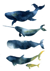 Watercolor whales set. Hand drawn sea animals silhouettes with sky texture. Prints with blue whale, harwhale, cachalot, orca isolated on white background. For design, print, fabric and background.