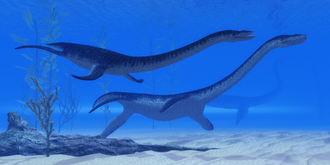 Plesiosaurus Jurassic Reptiles - Plesiosaurus marine reptile dinosaurs swim together in Jurassic Seas to find their next prey.