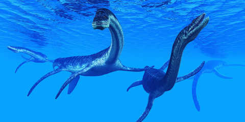 Plesiosaurus Marine Reptiles -Plesiosaurus marine reptile dinosaurs swim together in Jurassic Seas to find their next prey.