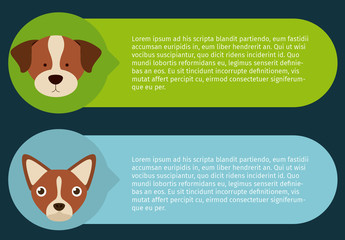 Dog and Pet Care Infographic 1