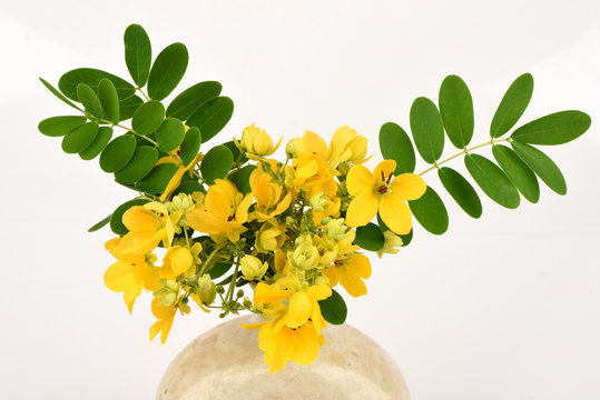 Scrambled eggs, Kalamona (Senna surattensis (Burm.f.) HSIrwin & Barneby) flowers, herbs, Thailand properties of the medicine, the leaves can be eaten as a vegetable and a sacred tree.
