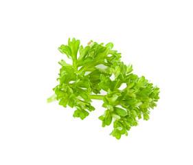 fresh green parsley isolate