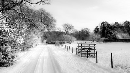 Snowy Country Lane in UK