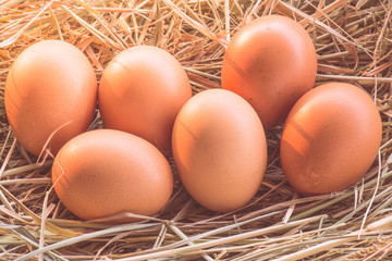Eggs in the nest of dry grass