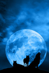 Wolf pack with moon over night sky