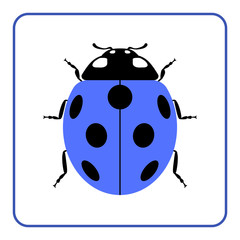 Ladybug small icon. Blue lady bug sign, isolated on white background. Wildlife animal design. Cute colorful ladybird. Insect cartoon beetle. Symbol of nature, spring or summer. Vector illustration