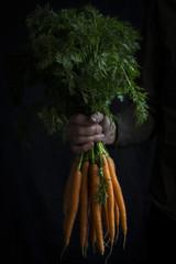 Bundle of carrots in hand