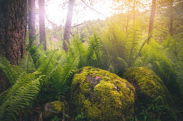 Fern leaf growing in deep forest Landscape summer scenic view