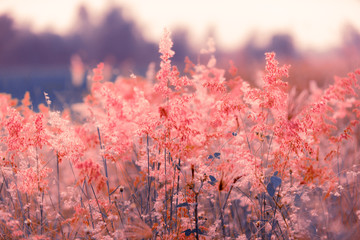 Flowers grass blurred bokeh background