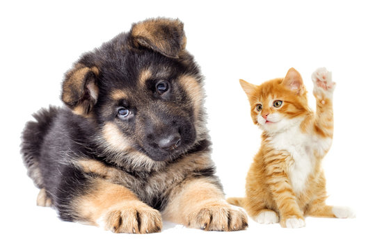 kitten and Puppy looking