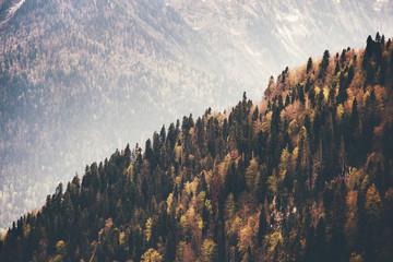 Iglastego lasu krajobrazu widok z lotu ptaka jesieni sezon Podróży pojęcie - 124435478
