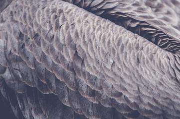 Plumes d'aigle Wall mural