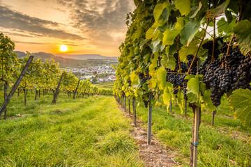 Fototapete - Weintrauben und Sonnenuntergang im Weinberg