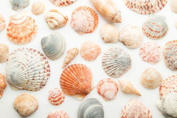 Seashell pattern on a white background