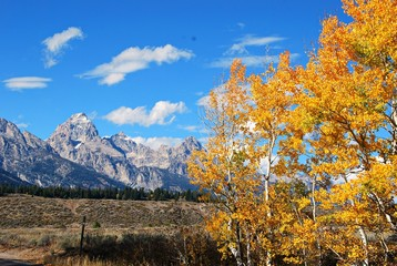 Tetons with Golden Aspens and  Cloud Puffs