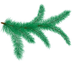Vector illustration of fir branch