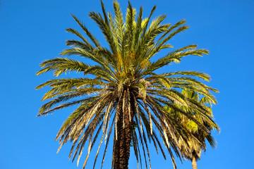 Park z roślinami tropikalnymi