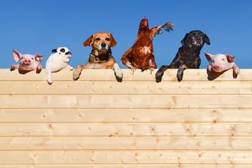 Ziemlich beste Freunde - Gruppe Haustiere auf einer Bretterwand, textfreiraum