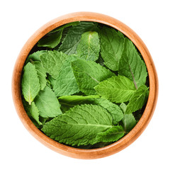 Fresh peppermint leaves in a wooden bowl on white background. Green Mentha piperita, an edible herb. Mint flavor is used for ice cream, cocktails and toothpaste. Isolated macro food photo close up.