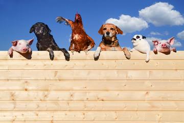 Gruppe von Haustieren schaut über eine Holzwand, Werbung - Banner