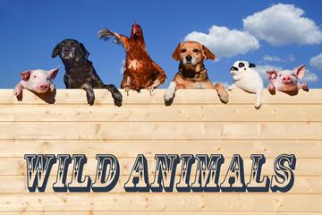 Wall Mural - Wild Animals - verschieden Haustiere lehnen über eine Holzwand