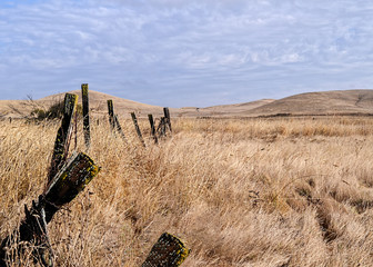 Very dry pasture in the central valley of California in the end of summer, displaying brown grass, old fence, and cloudy skies.