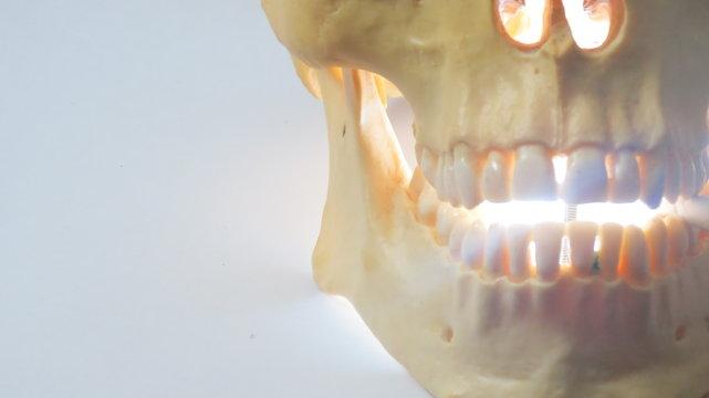 Skull display bright smile
