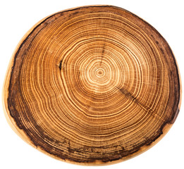 crossection of an  tree trunk
