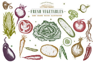 Hand drawn vegetables set, collection eco food