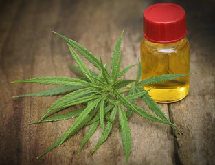 Medicinal cannabis leaves with oil