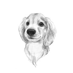 Cute dog sketch. Hand painted. Black and white watercolor illustration.