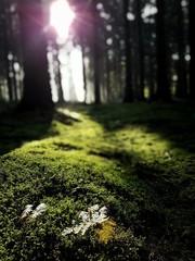 Moos im Sonnenlicht
