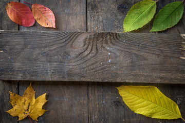 Altes Holz mit Laub
