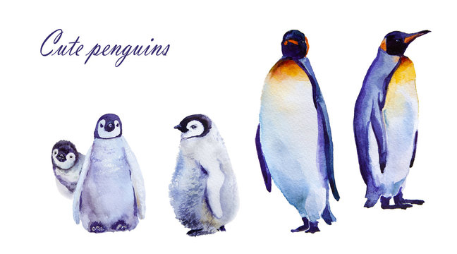 watercolor illustration. Emperor penguins. isolated on white background
