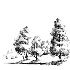 Forest sketch. Beautiful garden hand drawing
