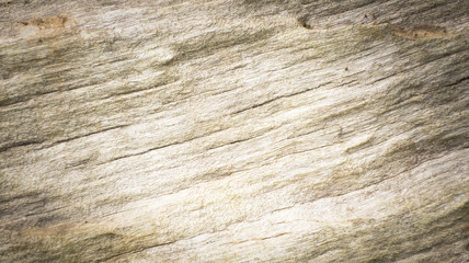 Wooden background or texture of wood.Top view and Close up