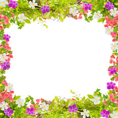 Beautiful green leaves frame with flower on white background