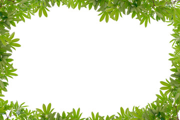 Beautiful Green leaves frame on white background.